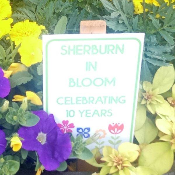 Sherburn in Bloom